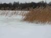 Riet in de sneeuw 1